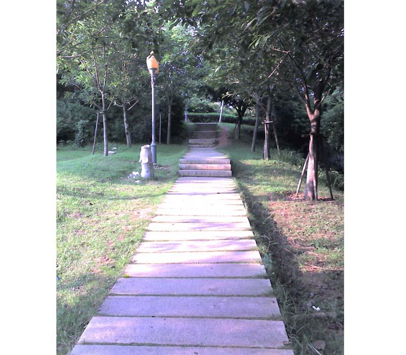 福建|泉州|森林公园图片